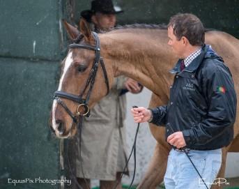 BARROCA HORSE INSPECTION
